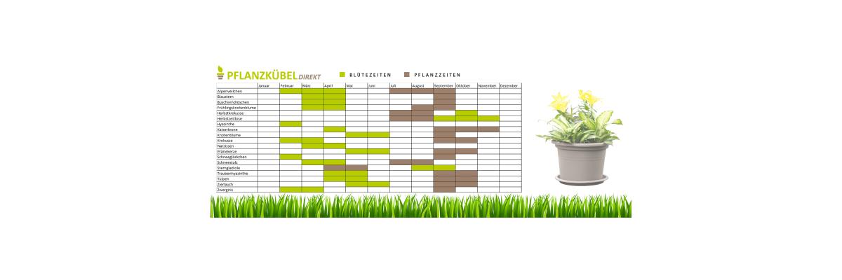 Infografik: Frühblüher und Blumenzwiebeln  - Blüte- und Pflanzzeiten von Blumenzwiebeln