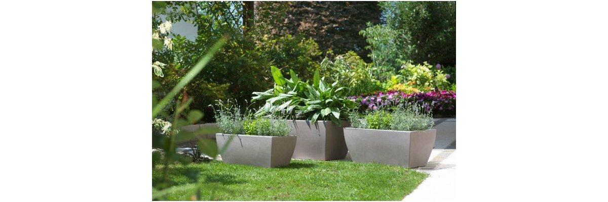 Pflege von Kübelpflanzen im Frühjahr  - Pflege von Kübelpflanzen im Frühjahr