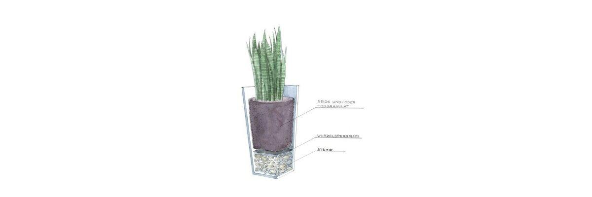 Pflanzkübel richtig bepflanzen  - Pflanzkübel richtig bepflanzen