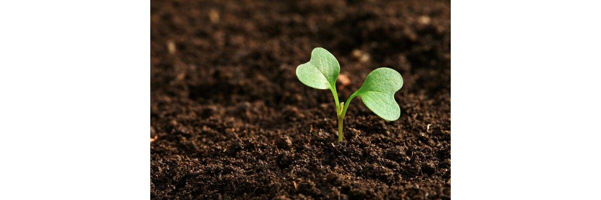 Die richtige Blumenerde für Ihre Pflanzen  - Die richtige Blumenerde für Ihre Pflanzen