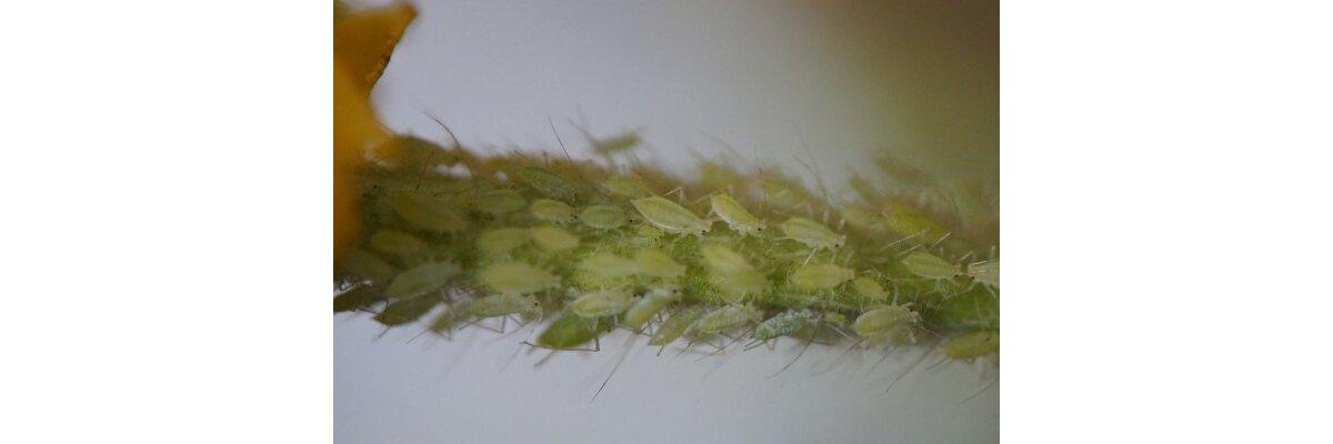 Die besten Tipps zur Bekämpfung von Blattläusen und anderen Schädlingen  - Tipps gegen Schädlinge