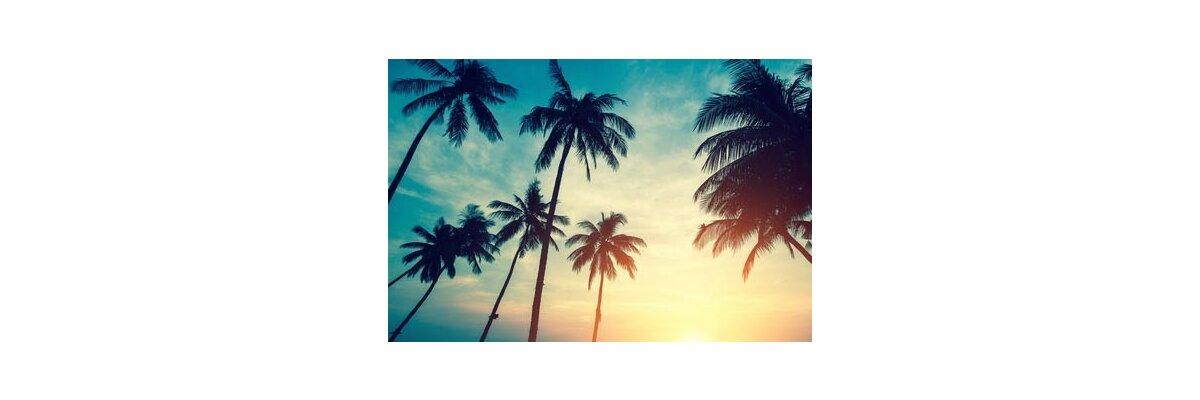 Was Sie bei echten Palmen im Freien zu beachten haben - Was Sie bei echten Palmen im Freien zu beachten haben
