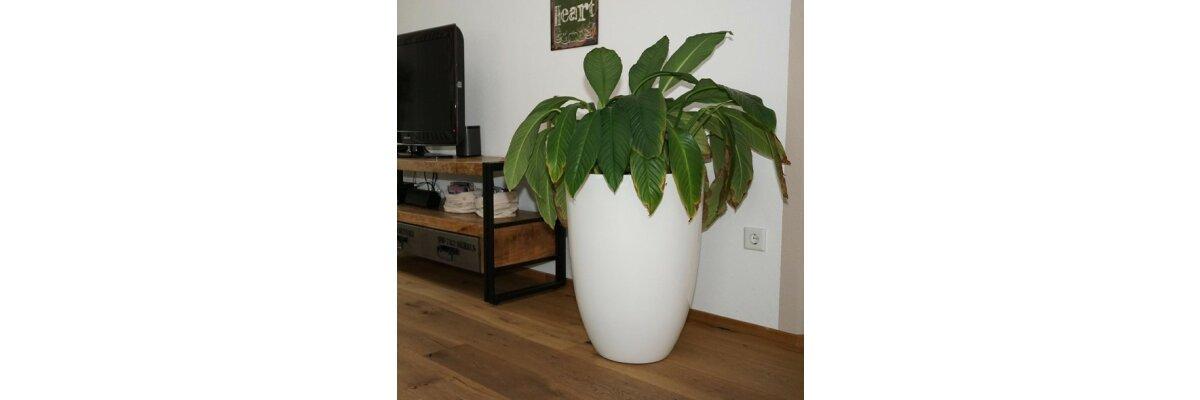 Pflanzkübel für Innenräume - Pflanzkübel für Innenräume