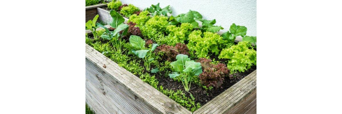 Welche Pflanzen sind für Hochbeete geeignet? - Gemüse und Kräuter im Hochbeet anbauen