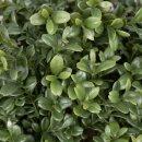 Kunstpflanze LEON Buchsbaum 60