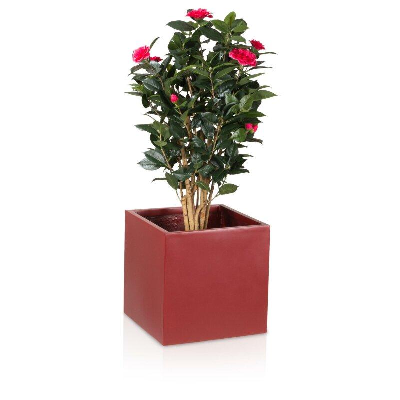 Quadratischer Pflanzkübel für Kletterpflanzen und Co.