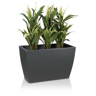 Pflanztrog ARTESA 50 Kunststoff anthrazit matt