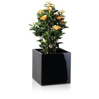 Pflanzkübel CUBO 40 Fiberglas schwarz hochglanz